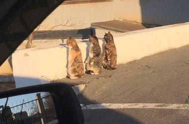 """Синхронные коты """"взорвали"""" интернет"""
