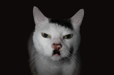 Британские ученые выяснили, почему некоторые коты похожи на Гитлера