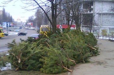 Вопрос чиновнику: Как в Киеве будут избавляться от новогодних елок