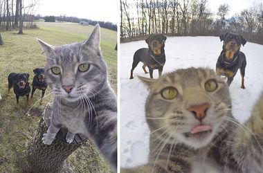 Instagram кота