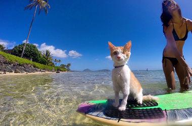 Одноглазый кот-серфингист покорил Интернет