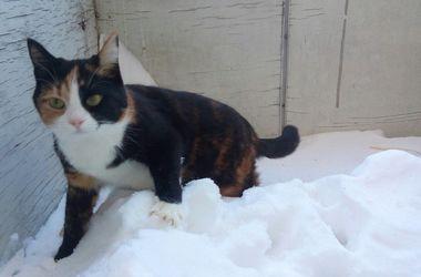 От холодов гибнут птицы и бездомные собаки и коты