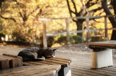 В Одессе неизвестные жестоко отстреливают бездомных кошек