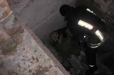 Под Киевом пожарные спасли симпатичного пса