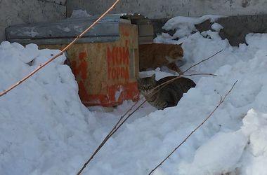 Для одесских котов построили теплые домики