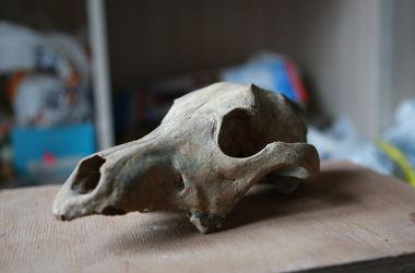 Раскопки старинной улицы в Киеве: археологи находят древние помидоры и черепа лошадей