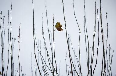 В Украине снова штормит