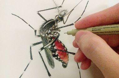 Распространения вируса Зика в Европе возрастет весной и летом