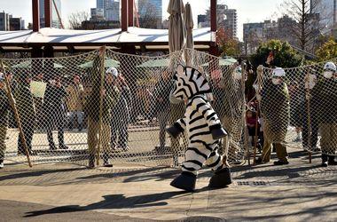 В Токио сотрудники зоопарка убили коллегу в костюме зебры