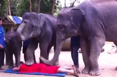 Три слона сделали мужчине массаж