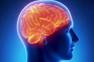 Ученые расссказали, как агрессия меняет мозг