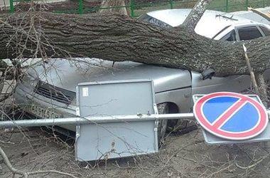 В Киеве дерево рухнуло на машины
