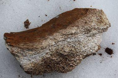 В Одесской области нашки останки мастодонта