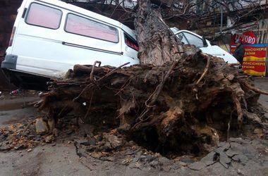В Одессе огромное дерево раздавило микроавтобус