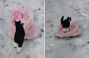 Кот-сноубордист стал звездой сети