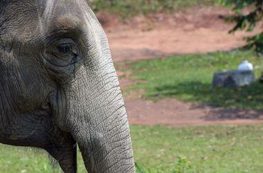 В Китае слониха растоптала 15 машин и убежала в заповедник