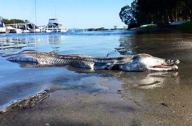 Странное существо, выброшенное на берег в Австралии, шокировало сеть