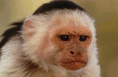 Пьяная вооруженная обезьяна устроила переполох в баре