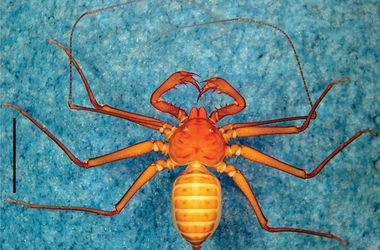 В Бразилии обнаружили новых жутких пауков с клешнями