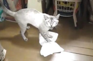 Видеохит: кот самостоятельно моет пол и при этом орет на хозяина
