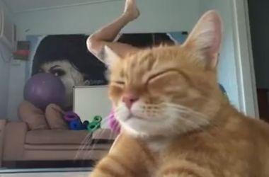 Рыжий кот помешал девушке записать видео с тренировками