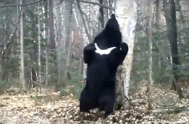 "Медведь покорил интернет своим ""танцем на пилоне"""