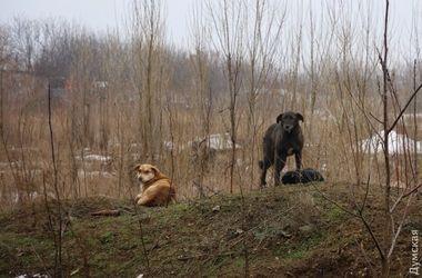 В Одессе маньяк-догхантер отравил и расстрелял еще 4 собак