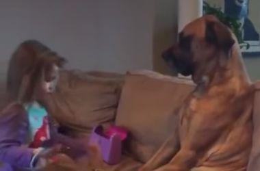 Неимоверно терпеливый пес покорил интернет