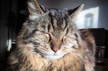 Самый старый в мире кот стал звездой сети
