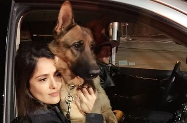 Неизвестные убили собаку Сальмы Хайек