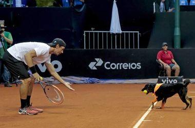 В Сан-Паулу мячи теннисистам подавали собаки
