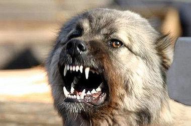 В Харьковской области бешеные собаки искусали пять человек