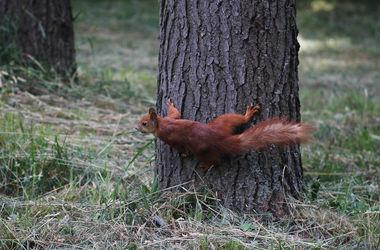 В киевском парке Рыльского пройдет толока