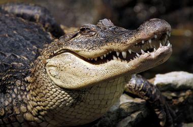 "Российского туриста в Индонезии ""съел"" крокодил"