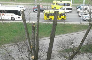 """Во Львове """"изуродовали"""" дерево, которое защищало многоэтажку от солнцепека и пыли"""