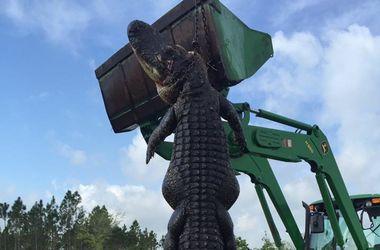 Жители Флориды застрелили четырехметрового аллигатора