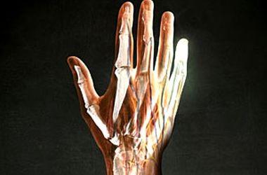 В генах человека нашли функцию регенерации конечностей