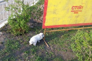В Киеве заметили беспризорного кролика