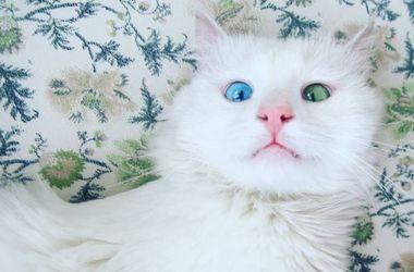 """Найден """"самый красивый в мире"""" котик"""