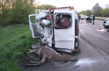 В Ровенской области водитель переехал лося и погиб сам