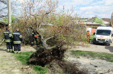"""В Черкассах мужчина оказался в """"ловушке"""" в ветвях упавшего дерева"""