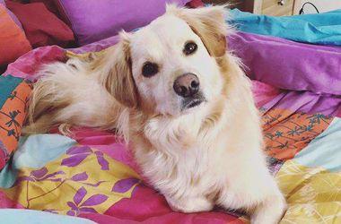 Видеохит: эмоциональная встреча собаки с хозяйкой после долгой разлуки