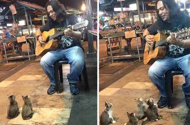 Видеохит: 4 забавных котят пришли послушать музыканта (видео)