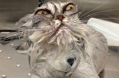 ТОП-15 домашних животных до и после ванны (фото)