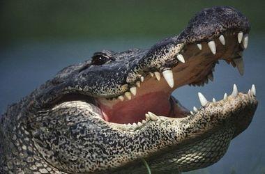 Видеохит: вежливый аллигатор позвонил в дверь хозяйке дома (видео)