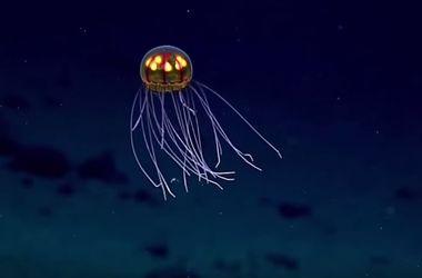 В Марианской впадине обнаружено существо неземной внешности (видео)