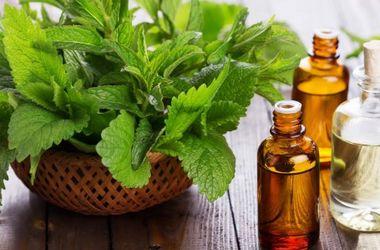 Запах мяты помогает похудеть – ученые