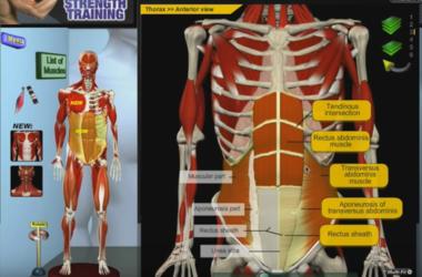 Как работают мышцы пресса и как его накачать (видео)