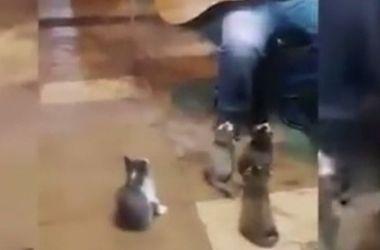Слушающие музыку барда коты  умилили Интернет (видео)