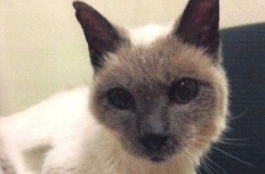 В США умер самый старый кот в мире